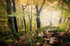 Höst i en härlig skog med stupade sidor Arkivfoton