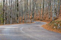 Höst i Forca D ` Acero, Abruzzo nationalpark, Italien Arkivfoton