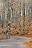 Höst i Forca D ` Acero, Abruzzo nationalpark, Italien Royaltyfria Foton