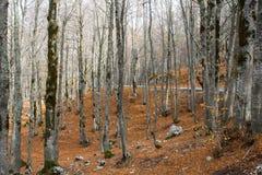 Höst i Forca D ` Acero, Abruzzo nationalpark, Italien Arkivfoto