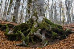 Höst i Forca D ` Acero, Abruzzo nationalpark, Italien Royaltyfri Fotografi