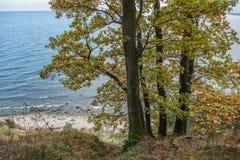 Höst i Gdynia Arkivfoton