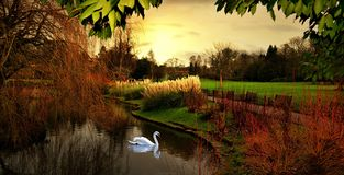 Höst i Hampstead london UK Arkivbilder