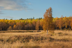 Höst i Lapland Royaltyfria Bilder