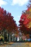 Höst i New England, Gloucester, Massachusetts Arkivfoton