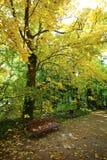 Höst i parken Arkivbild