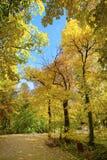 Höst i parken Royaltyfria Bilder