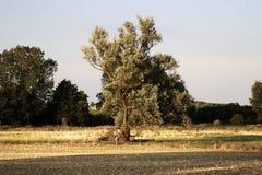 Höst i Schwerin Arkivbilder