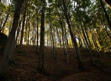 Höst i skog arkivfoton