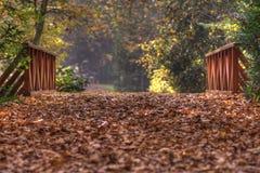 Höst i skog Royaltyfri Fotografi