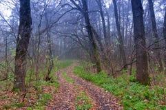 Höst i skog Arkivbild