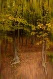 Höst i skog Fotografering för Bildbyråer