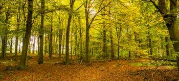 Höst i skogen Arkivbild