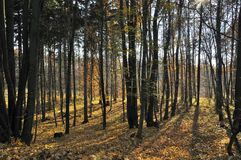 Höst i skogen Arkivbilder