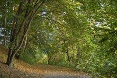 Höst i skogen Arkivfoton