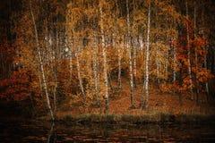 Höst i skogen Arkivfoto