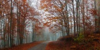 Höst i skogen Fotografering för Bildbyråer