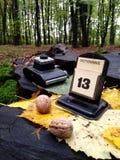Höst i skogen Oktober - regnig dag Arkivfoton