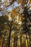 Höst i skogen, Tyskland Arkivbild