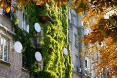 Höst i staden, en vide- växt på en byggnad mot en bakgrund av gul lövverk arkivbilder