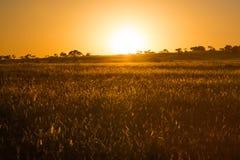 Höst i Sydafrika Arkivfoto