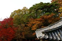 Höst i Sydkorea Arkivfoton