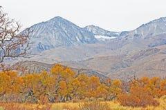 Höst i toppig bergskedja Nevada arkivbild
