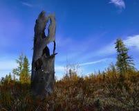 Höst i västra Siberia Arkivbild