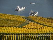 Höst i vingårdarna på floden rhine nära RÃ-¼desheim Arkivfoto