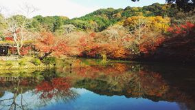 höst japan Arkivfoto