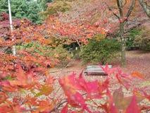 höst kyoto Royaltyfria Foton