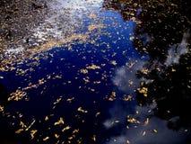 Höst Lake Royaltyfri Fotografi