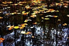 Höst lake Royaltyfria Foton