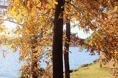 Höst lake Arkivfoto