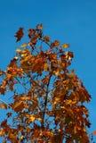 Höst leaves-3 Royaltyfri Foto