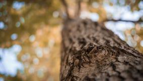 Höst med gamla träd Fotografering för Bildbyråer