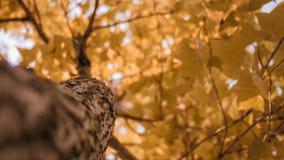 Höst med trädet Royaltyfri Foto