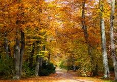 Höst nedgång Härlig guld färgade lövverkträd i en parkera, med den lilla vägen royaltyfri foto