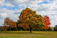 Höst nedgånglandskap färgrik leavestree arkivfoto