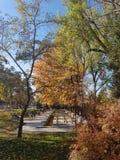 Höst Nedgångnaturplats höstlig härlig park royaltyfria bilder