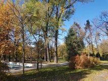 Höst Nedgångnaturplats höstlig härlig park arkivbild