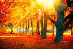 Höst Nedgångnaturplats höstlig park Royaltyfri Fotografi