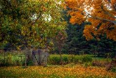 Höst-/nedgångplats med träd och det lantliga staketet Royaltyfri Foto