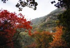 Höst nedgångskogsikt arkivfoto