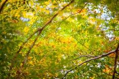 Höst och skog Arkivbild