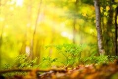 Höst och skog Fotografering för Bildbyråer
