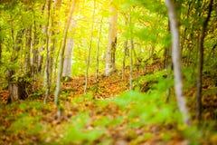 Höst och skog Royaltyfri Foto