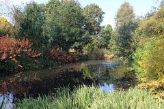 Höst på Beth Chatto & x27; s-trädgårdar Royaltyfri Bild