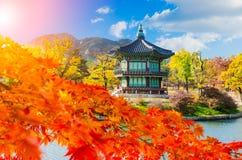 Höst på den Gyeongbokgung slotten, Seoul Sydkorea Arkivbilder