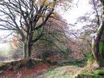 Höst på Exmoor Royaltyfri Fotografi